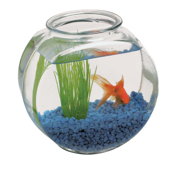 harley in a fish bowl a list interviews