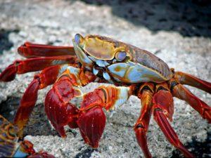 crab-298346_1920